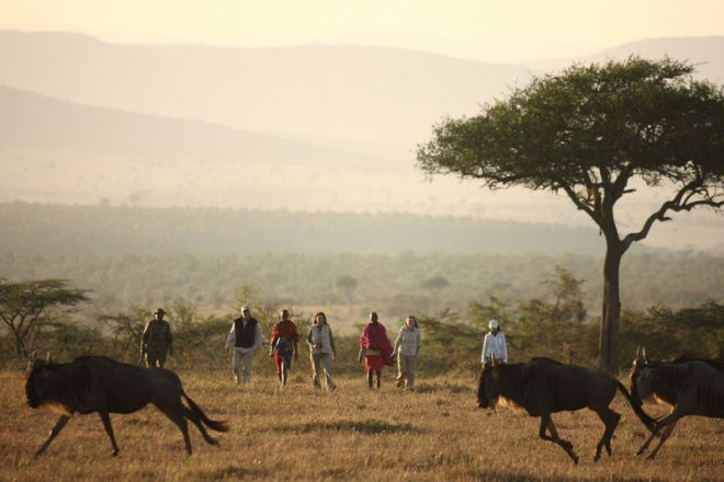 Kicheche Valley Camp Walk Wildebeest