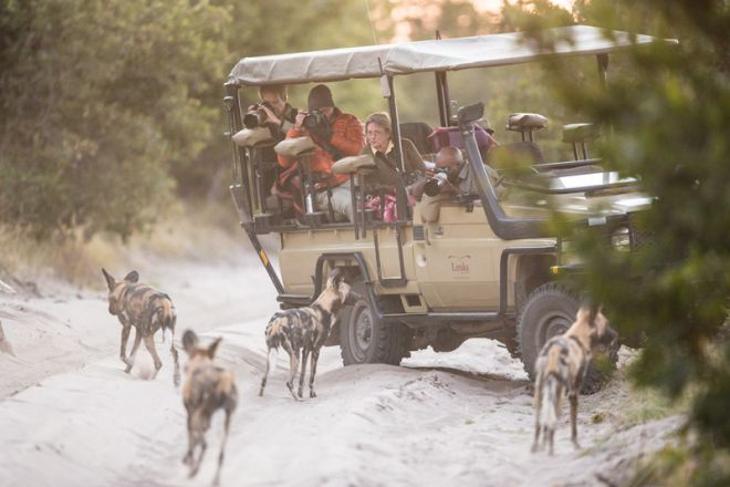 Letaka Private Mobile Safaris Game Drive Wild Dogs Photographers