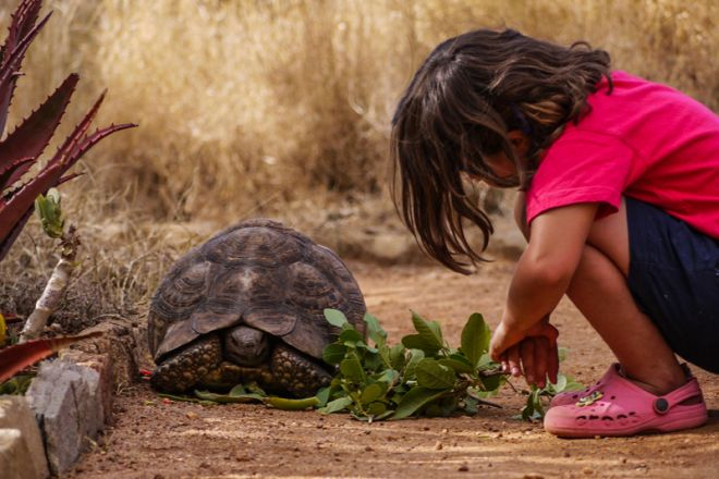 lewa-house-child-tortoise-c-lh