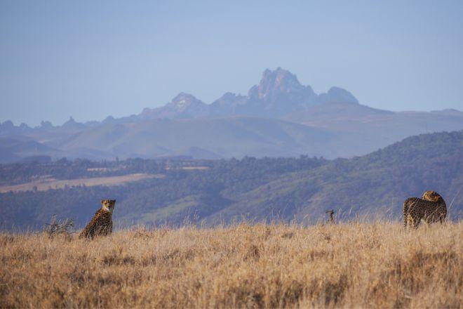 lewa-house-mount-kenya-cheetah-c-lh