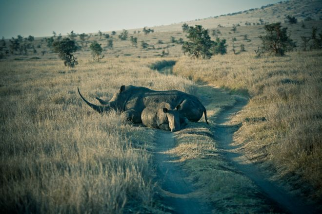 lewa-house-rhino-in-road-c_lh