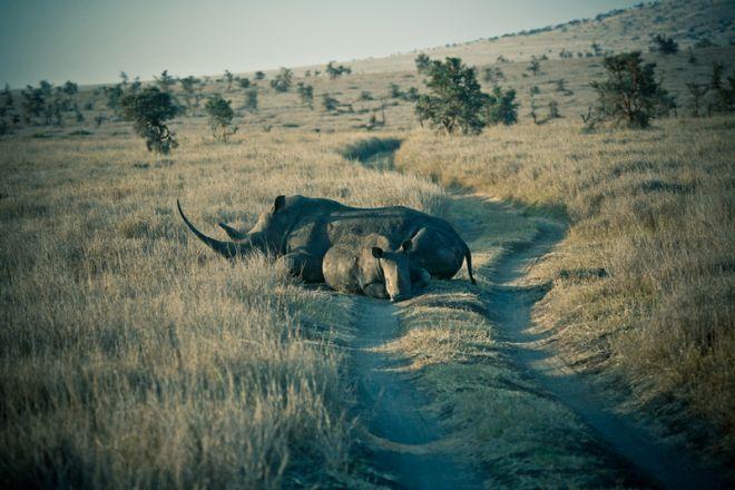 lewa-house-rhino-in-road-c_lh