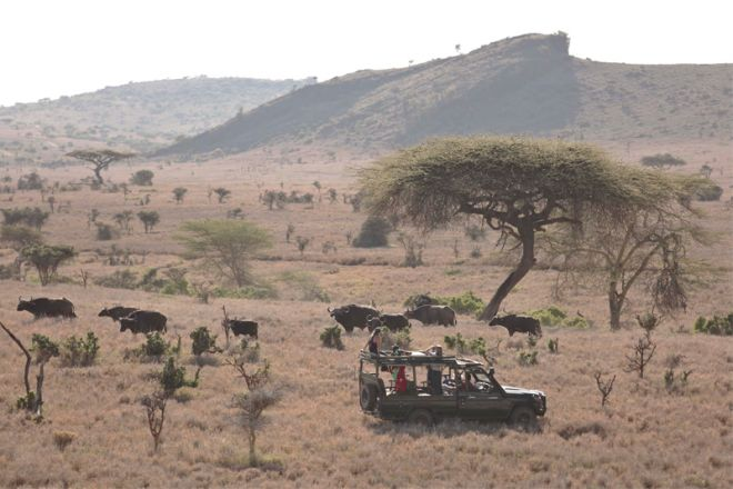 Lewa Wilderness Camp Game Drive with Buffalo