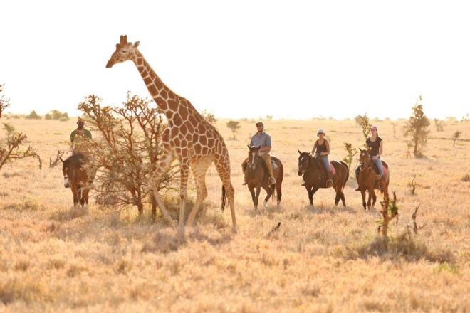 Lewa Wilderness Camp Horse Riding with Giraffe