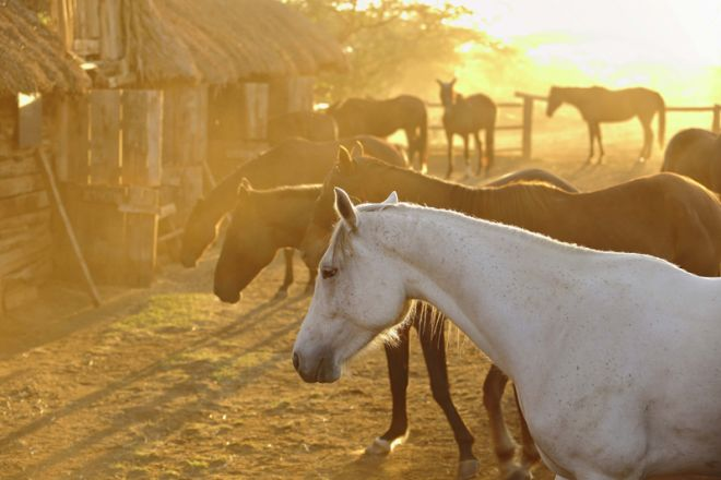 Lewa Wilderness Camp Stable Horse Riding