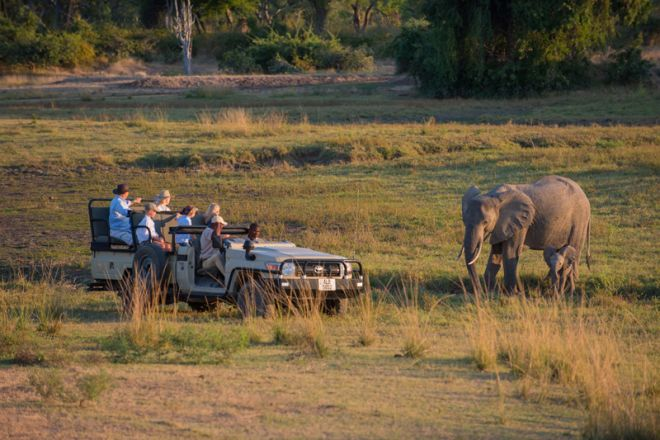Luangwa Safari House Game Drive Elephant