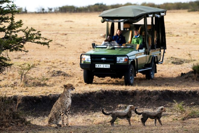 Mara Plains Camp Game Drive with Cheetah Cubs