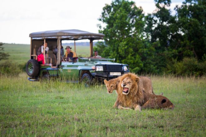 Mara Plains Camp Game Drive Lion Pair