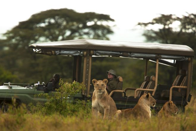 Mara Plains Camp Game Drive with Lion