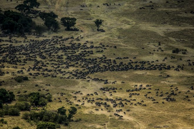 Mara Plains Camp Migration Aerial