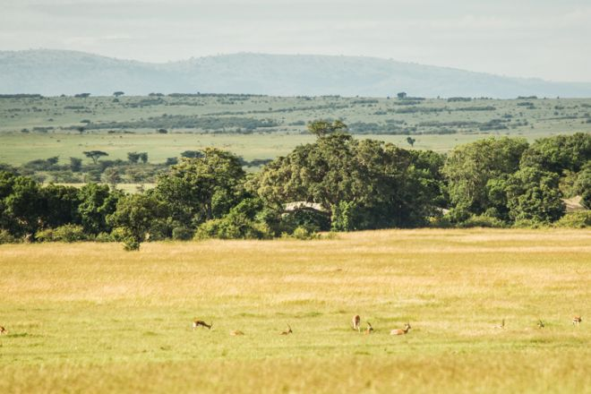Mara Plains Camp Setting