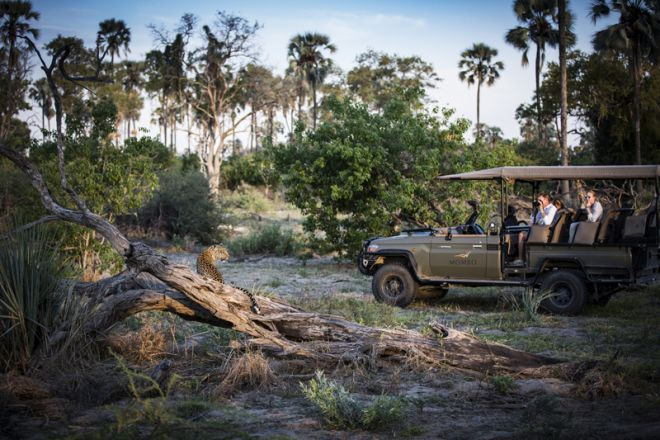 Mombo Camp Game Drive Leopard