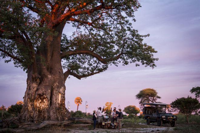 Mombo Camp Sundowner Baobab Bob