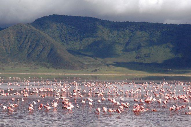 &Beyond Ngorongoro Crater Lodge flamingo lake