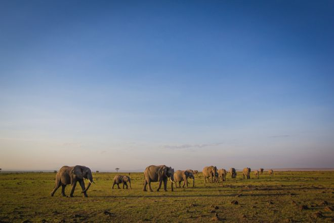 Offbeat Mara Camp Elephants