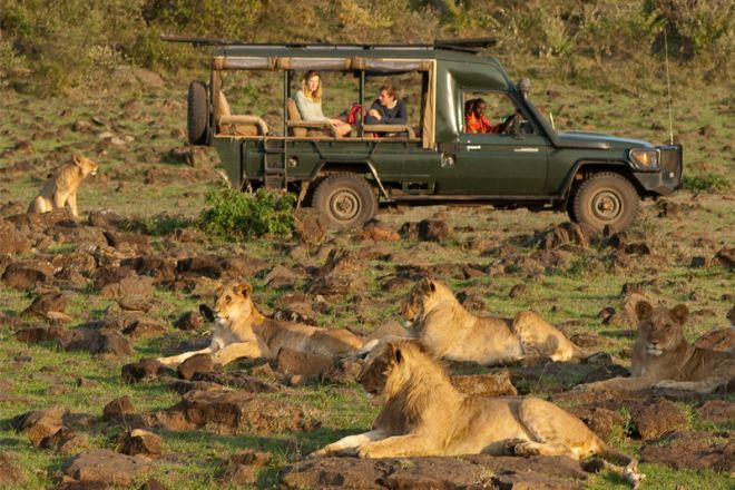 Offbeat Mara Camp Game Drive with Lion