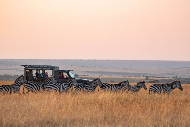 Offbeat Mara Camp Game Drive with Zebra