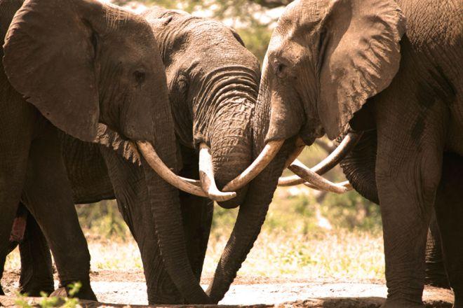 Richards River Camp Elephant