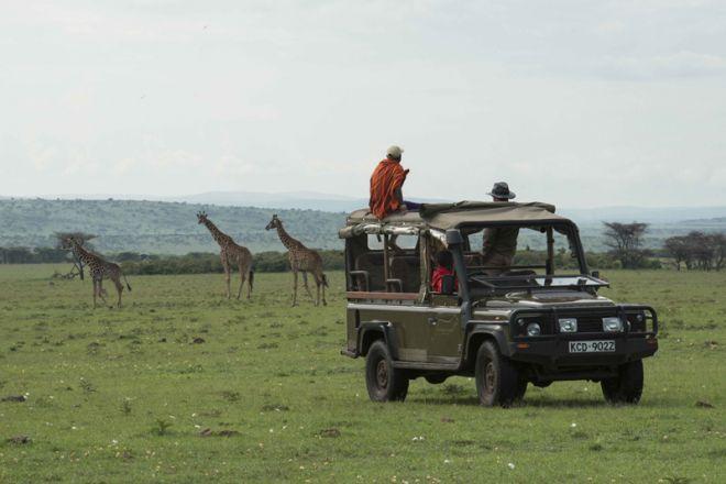 Richards River Camp Game Drive Giraffe