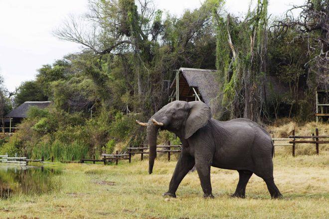 Savute Safari Lodge Elephant