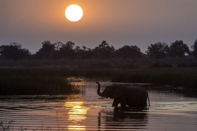Savuti Camp Elephant Crossing Sunset