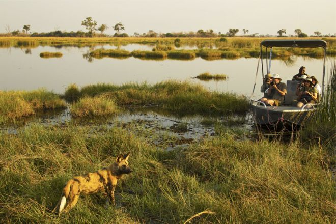 Selinda Camp Boat Wild Dog