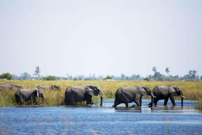 Selinda Camp Elephant Crossing Water