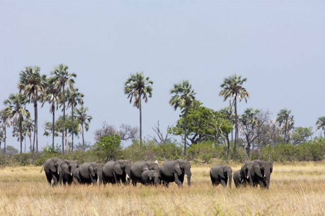 Selinda Camp Elephant Herd