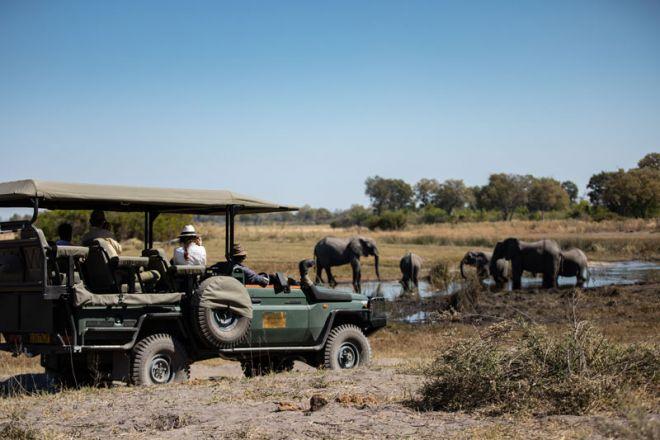 Selinda Camp Game Drive Elephant