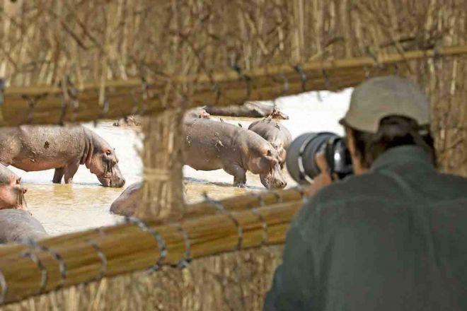 Shenton Safaris Hippo Hide