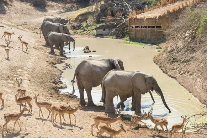 Shenton Safaris Last Waterhole Hide Elephants