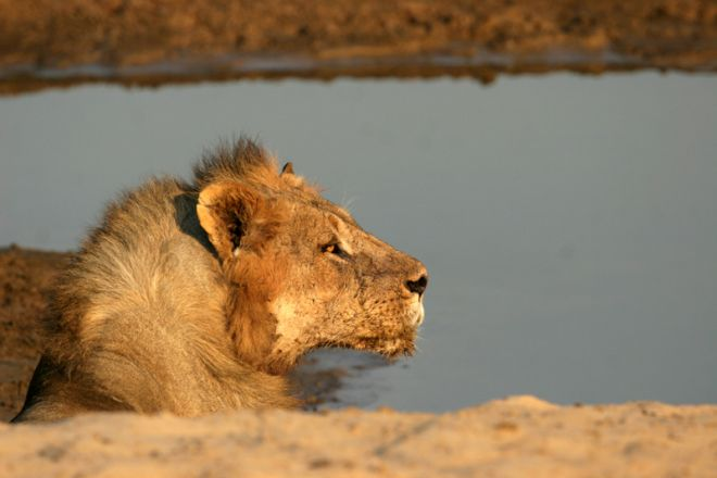 Shenton Safaris Lion Water Hole