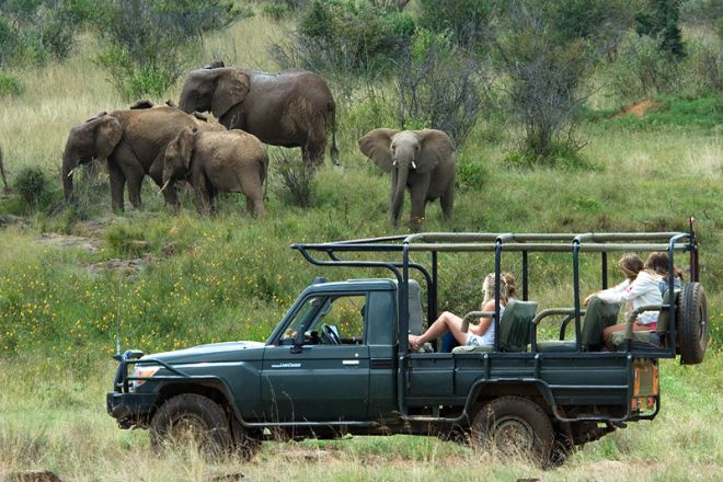 Sosian game drive with elephants