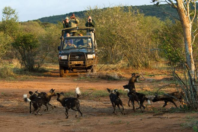 Sosian game drive with wild dogs