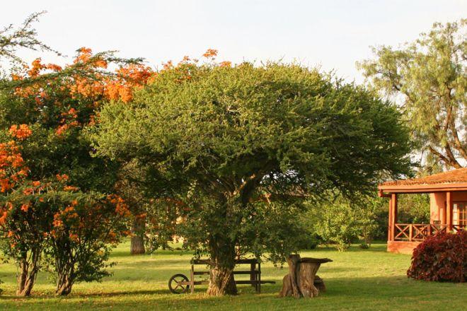 Sosian gardens