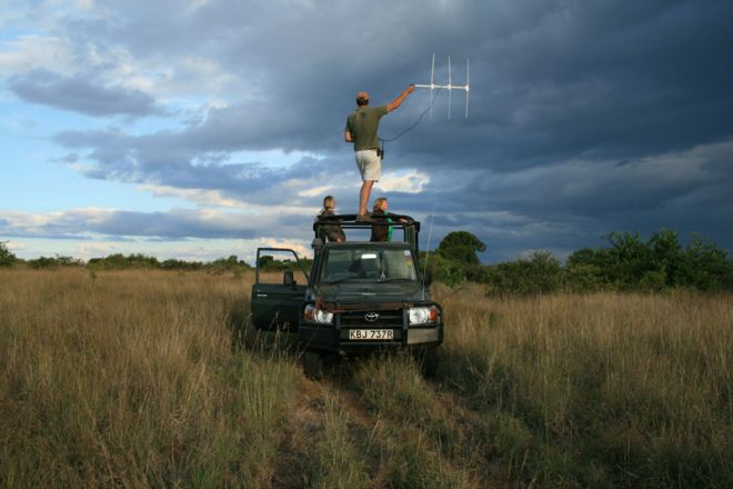 Sosian lion tracking game drive