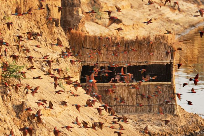 Tafika Camp Carmine Bee Eaters Hide