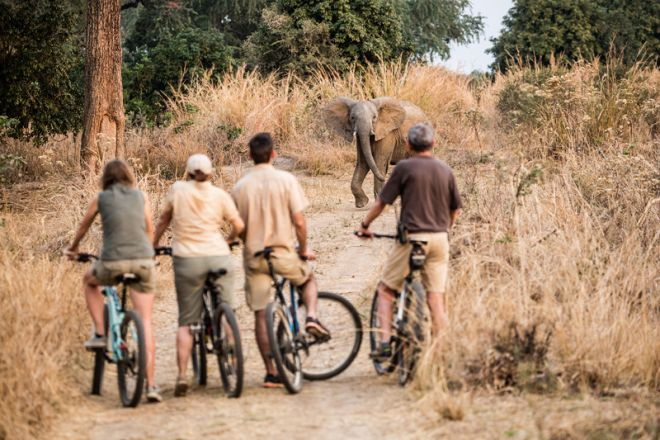 Tafika Camp Cycling Elephant