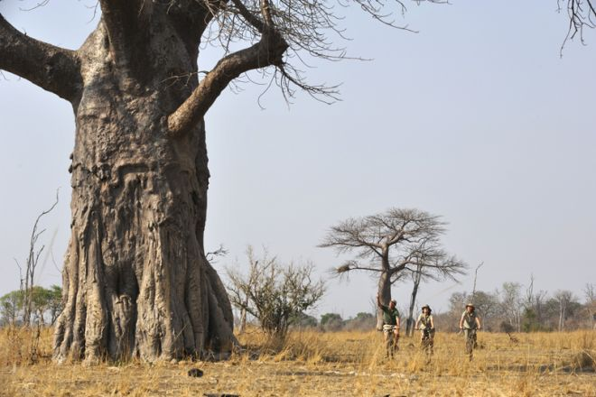 Tafika Camp Cycling Giant Baobab