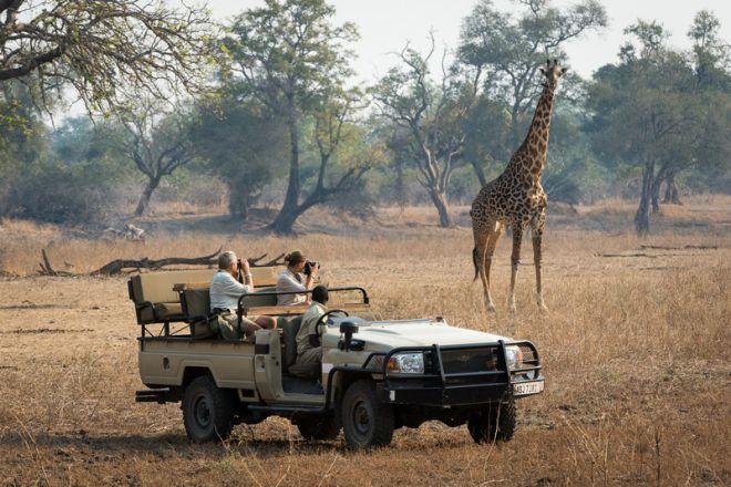 Tena Tena Game Drive Giraffe