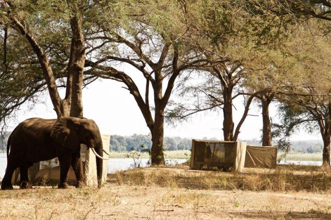 Tusk & Mane Mobile Camping Kutali Island Tents Elephant