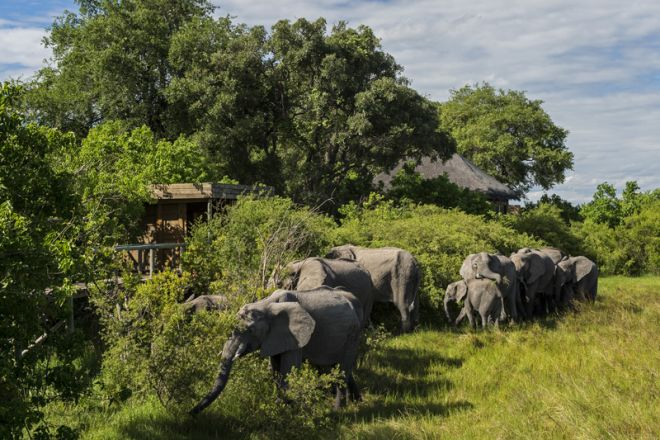 Vumbura Plains North Camp Elephants