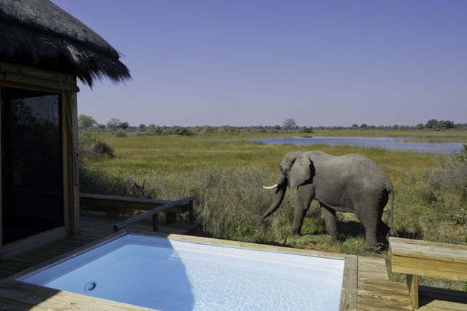 Vumbura Plains Plunge Pool