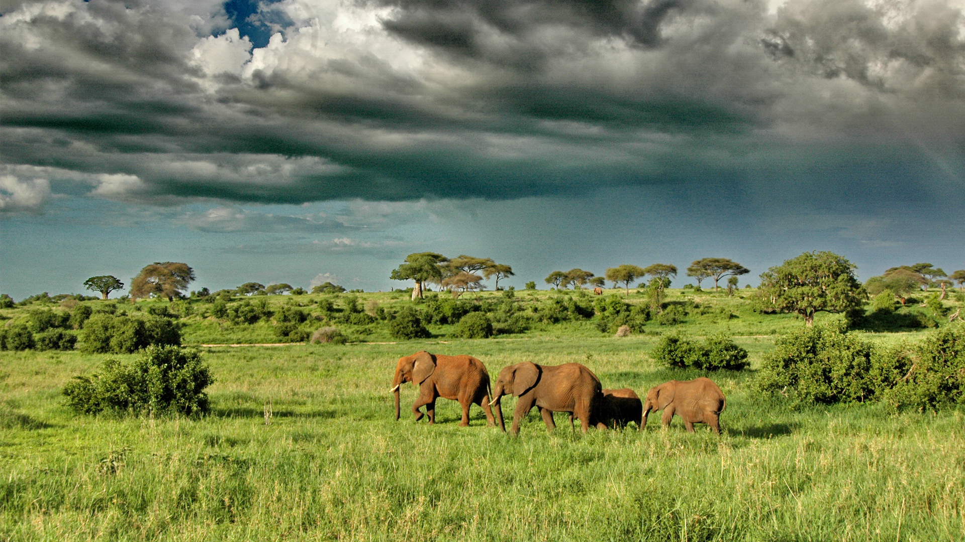 Tanzania Regions Tarangire and Lake Manyara asilia tarangire elephants