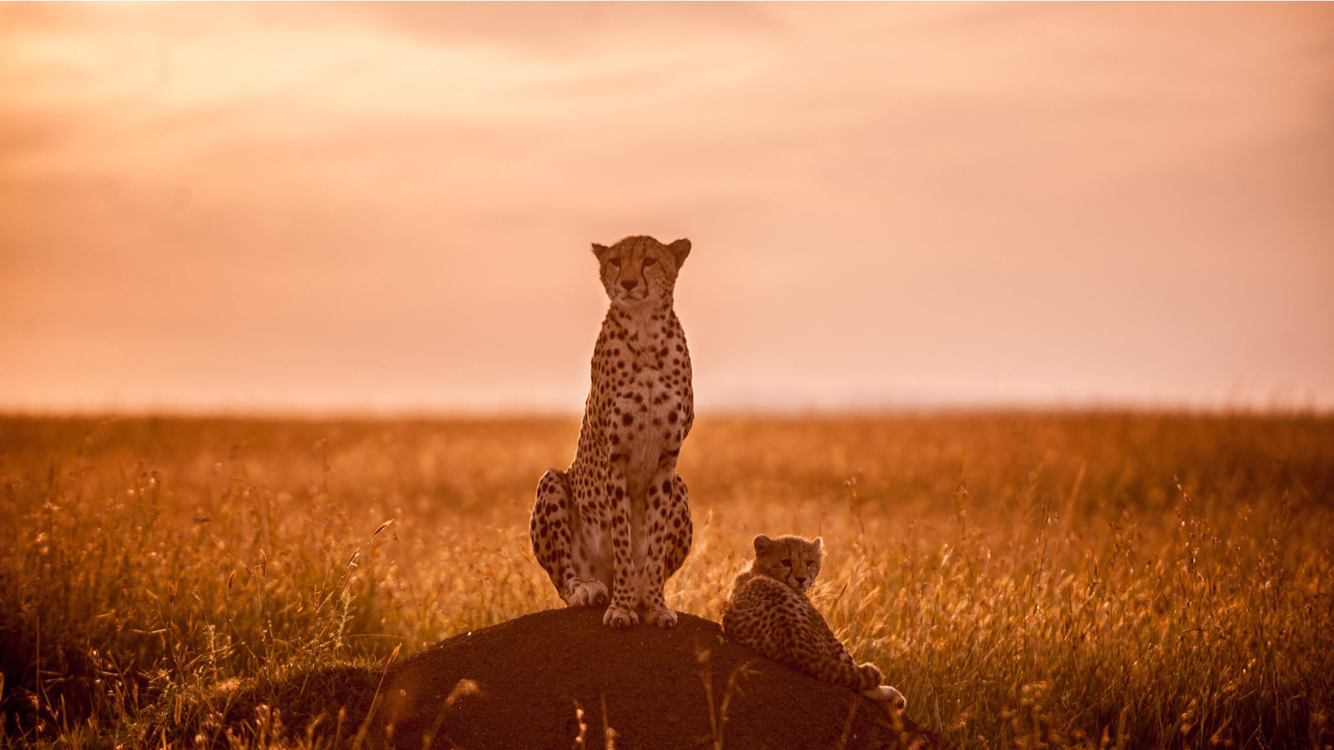 Why Safari Consultants header cheetah cub mount sunlight