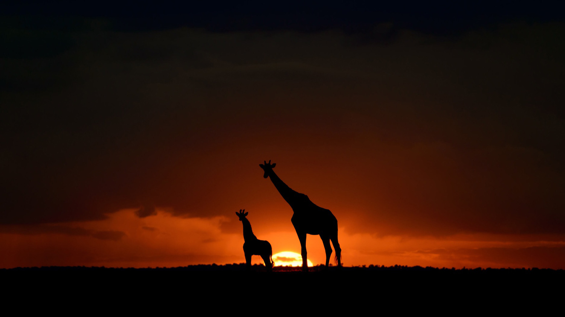how we create your safari giraffe sunset
