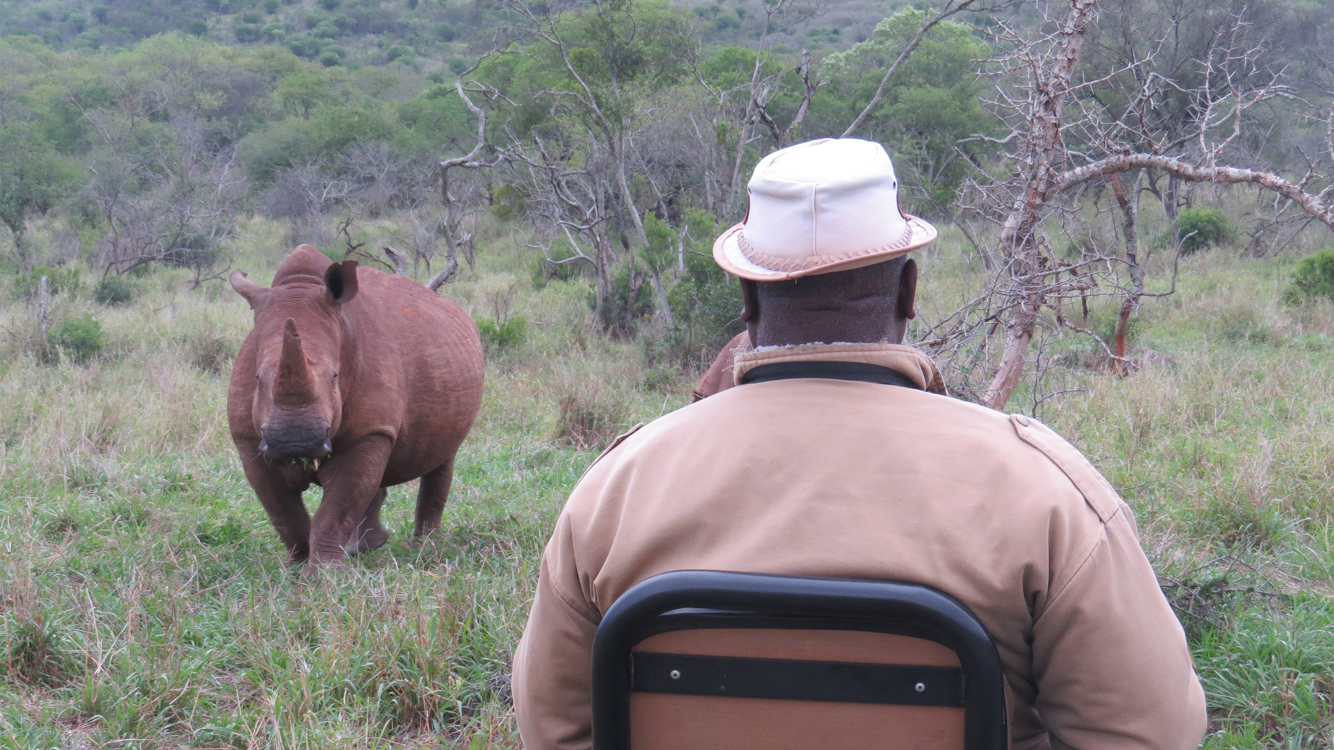 south africa private and specialist guiding rhino game drive