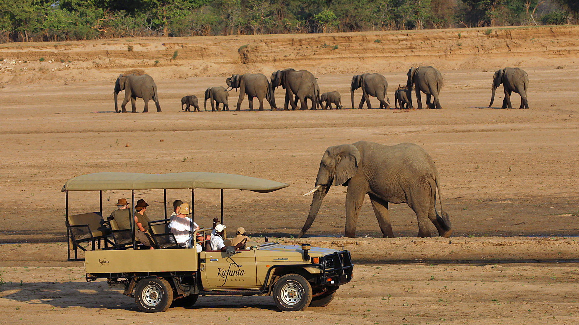 zambia itineraries kafunta game drive with elephants