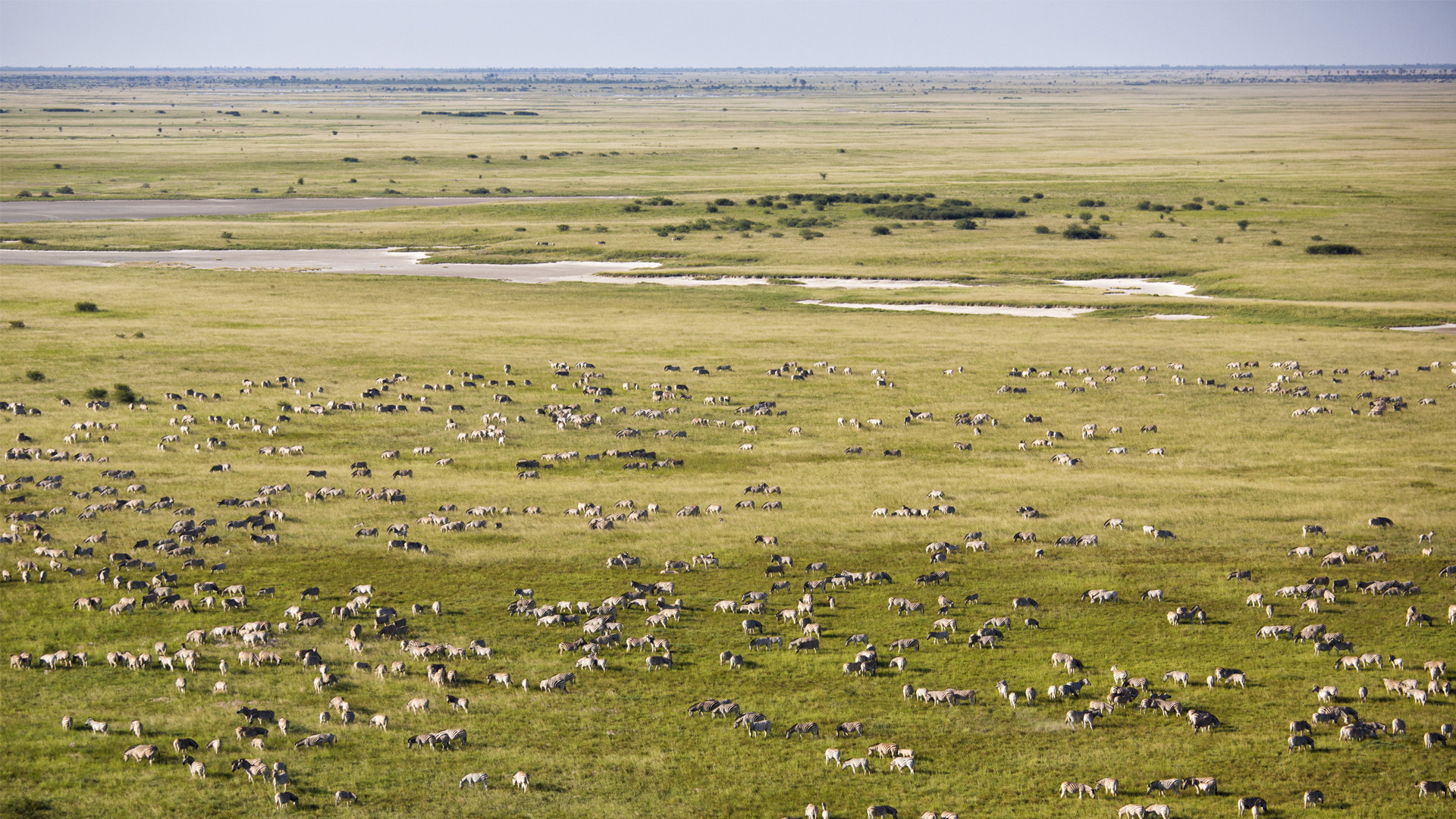 Botswana Regions Makgadikgadi Pans and Nxai Pan National Park migration