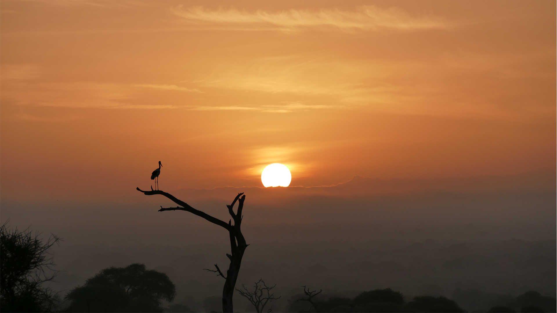 All About Safaris Great Value header rob heron silhouette sunset